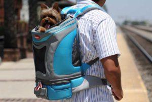 Transportines Para Perros Pequeños