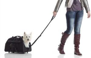 Mejores Transportines Con Ruedas Para Perros