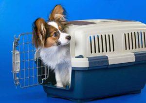 Mejores Transportines De Plástico Para Tu Mascota