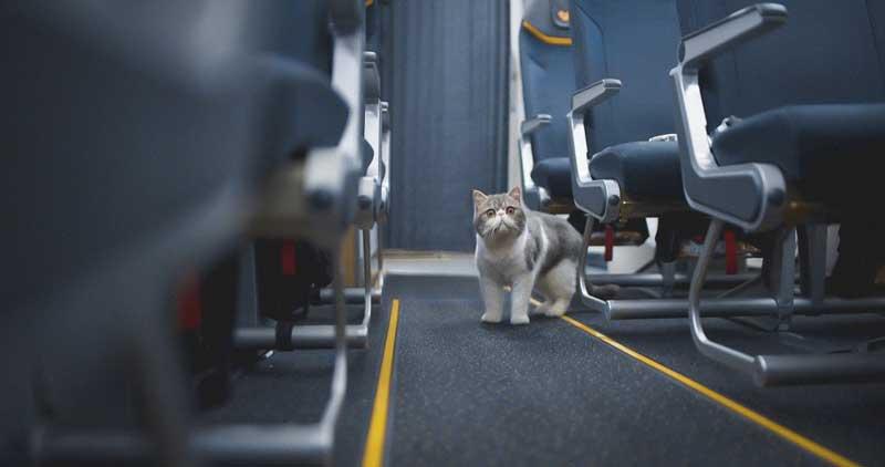 transportines gatos iata
